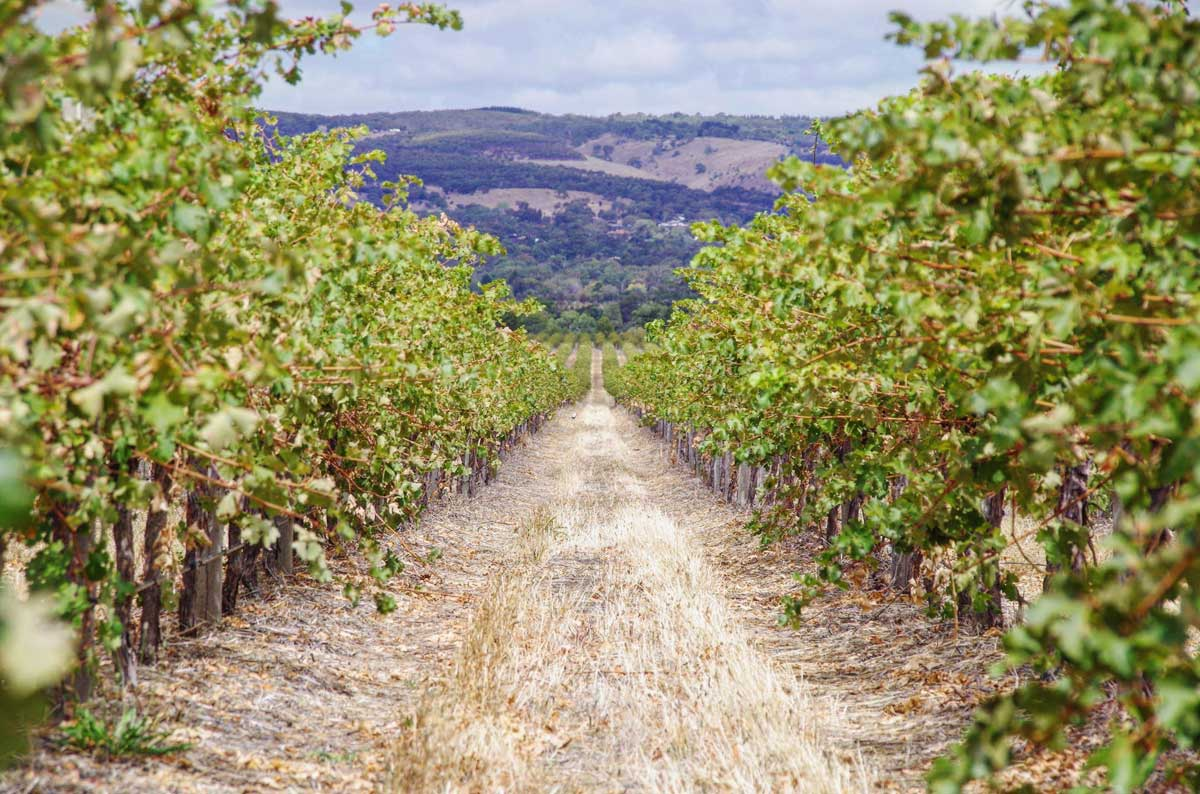 farm insurance - path